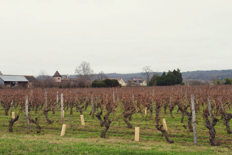 loire valley wines-4