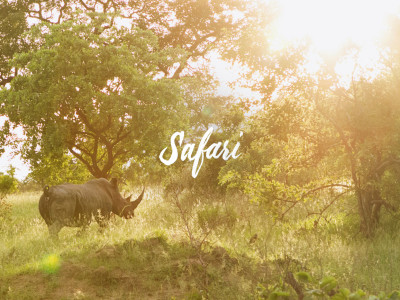 Adventures in South Africa - Safari