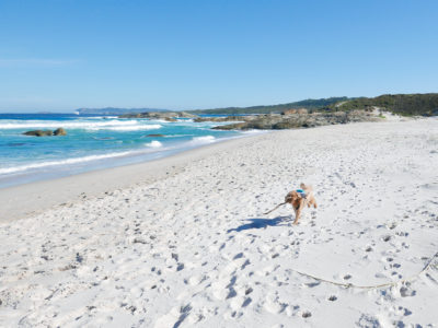 Adventures in South West WA (with a dog)